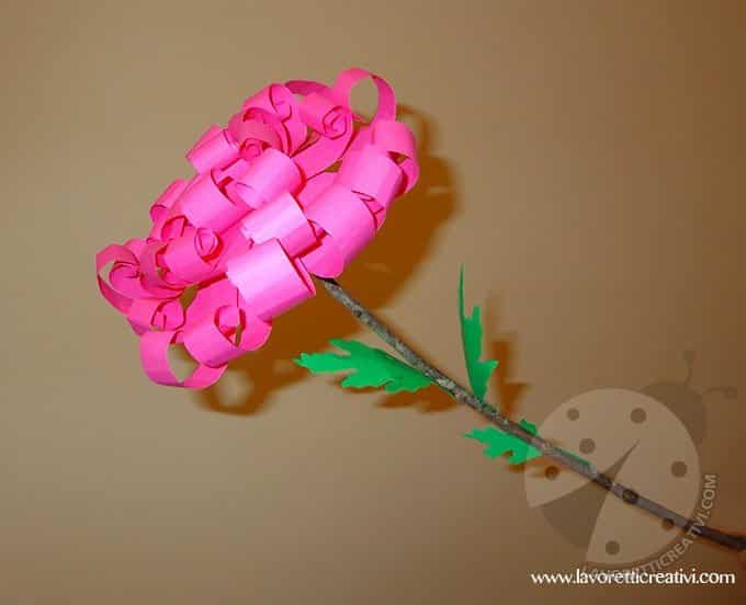chrysanthemum-crisantemo